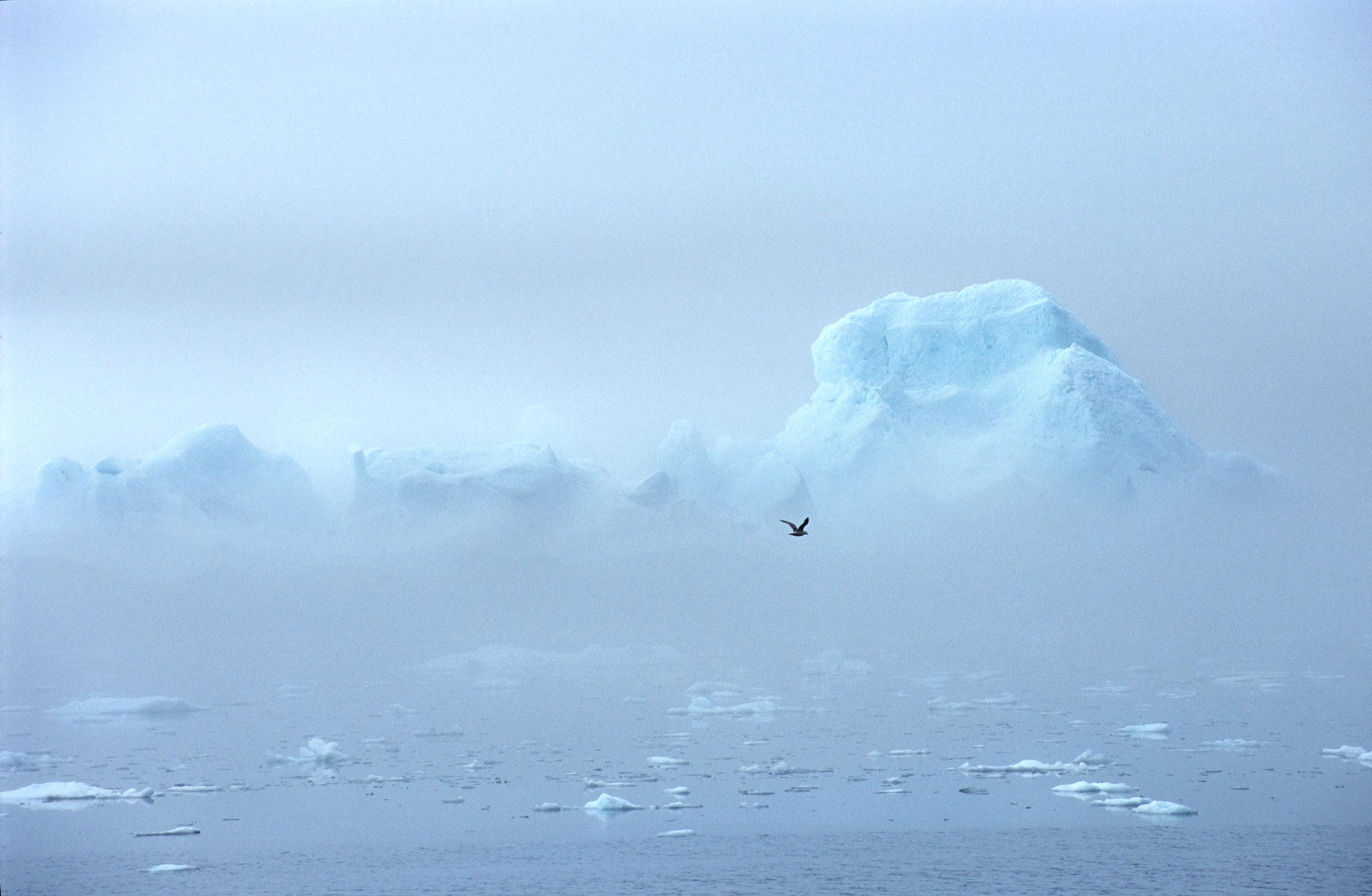 greenland-iceberg-fog