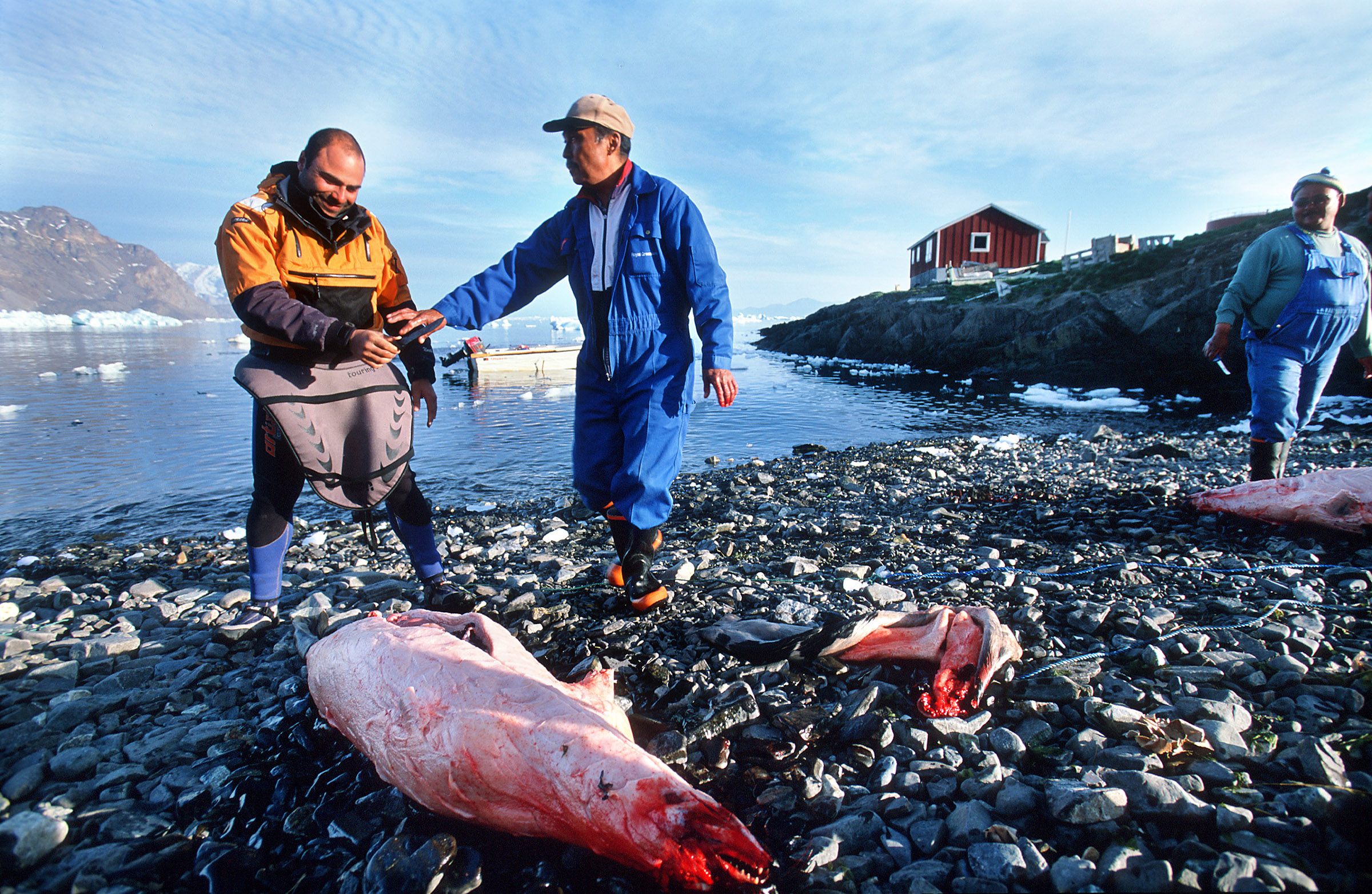 greenland-seal-meat
