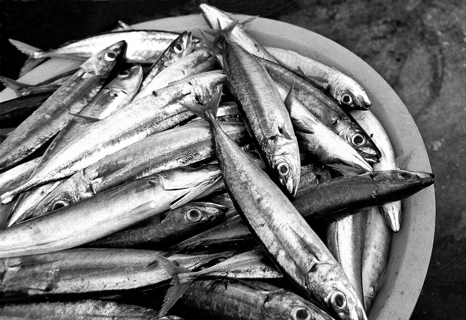 Basket full of mackerels for the market. Ponta do Sol, Santo Antao.