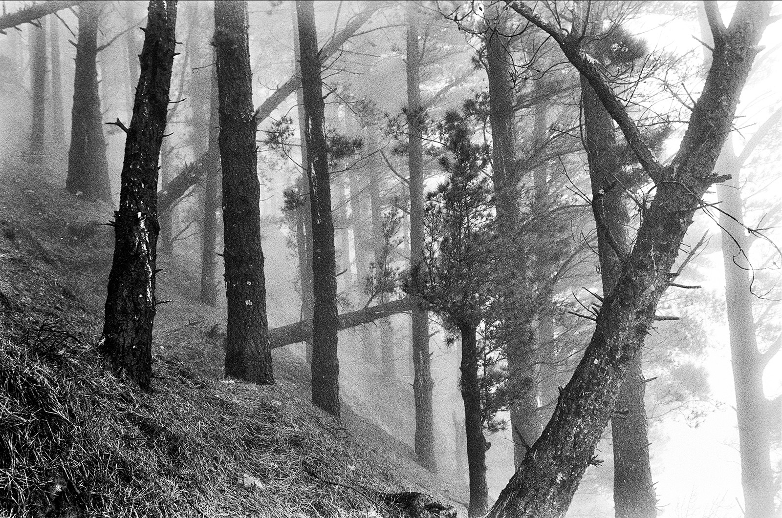 Trees in fog. Ponta do Sol, Santo Antao
